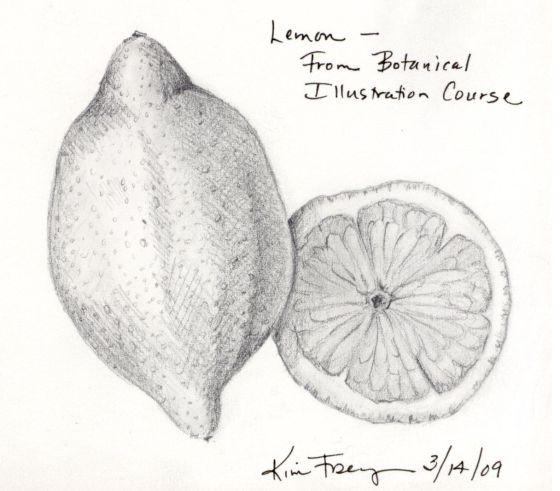 botanicallemon